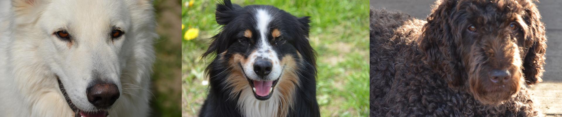 Hundehort Kiel • Hort | Verhaltensberatung | Zucht | Seminare
